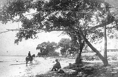 P14320. Cairns Esplanade, c1890