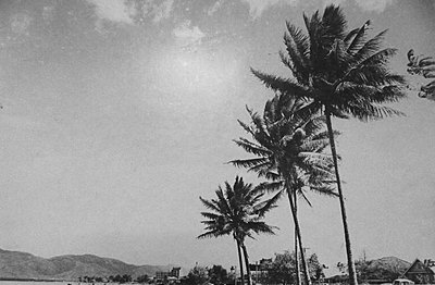P18509. Esplanade Cairns with coconut palms and Cairns Base Hospital in background in 1950s